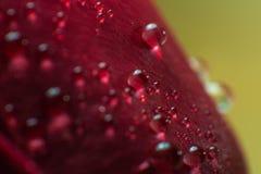 Le symbole de l'amour et photo de pétales de rose rouges romantiques de sentiments de la macro avec de l'eau chute Photographie stock