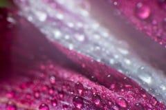 Le symbole de l'amour et photo de pétales de rose rouges romantiques de sentiments de la macro avec de l'eau chute Image libre de droits