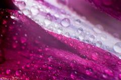 Le symbole de l'amour et photo de pétales de rose rouges romantiques de sentiments de la macro avec de l'eau chute Photographie stock libre de droits