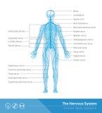Le système nerveux Photo libre de droits