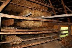 Le tabac part du séchage Photo stock