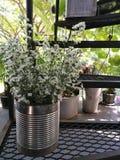 Le taglierine bianche fiorisce in latta sul lato sulla scala al giardino con il fondo della sfuocatura, fondo della natura del fi immagini stock libere da diritti