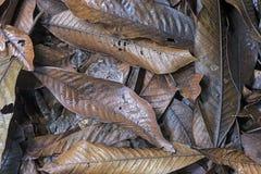 Le tapis des morts laisse la décomposition dans le plancher de forêt Photos libres de droits