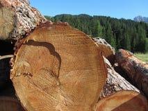 Le tas de bois du rond ouvre une session les bois image stock