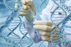 Le technicien de laboratoire effectue un essai d'ADN Photos stock
