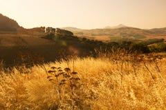 Le temple dorique de Segesta photo libre de droits