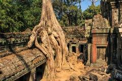 Le temple ruine envahi par des arbres Image stock