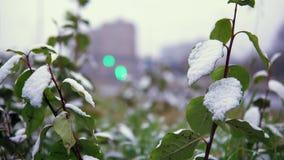 Le temps anormal est neige humide au-dessus de la route urbaine banque de vidéos