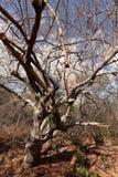 Le termiti e la formica annida nel Caatinga del Brasile fotografie stock