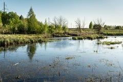 Le terrain marécageux avec l'herbe sèche, jeunes arbres verts, ligne électrique dans la forêt, temps de coucher du soleil de ress Photographie stock