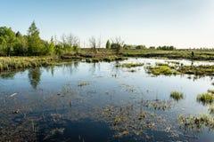 Le terrain marécageux avec l'herbe sèche, jeunes arbres verts, ligne électrique dans la forêt, temps de coucher du soleil de ress Photo libre de droits