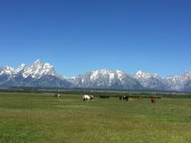 Le Tetons grand Photo libre de droits
