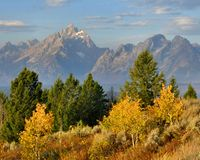 Le Tetons grand en automne Photo libre de droits
