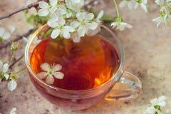 Le thé noir dans la tasse en verre avec la fleur de ressort s'embranche sur vieux W photos libres de droits