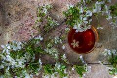 Le thé noir dans la tasse en verre avec la fleur de ressort s'embranche sur vieux W Image stock
