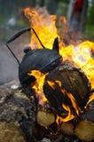 Le thé noir est sur le feu Image stock