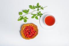 Le thé rose de chien avec la branche verte sur le blanc a isolé le fond Images stock
