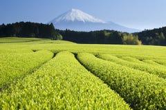 Le thé vert met en place V Image libre de droits