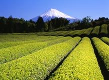 Le thé vert met en place VII images libres de droits
