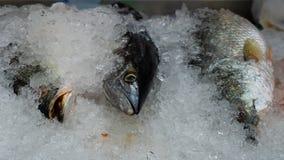 Le thon de Longtail frezzed par la glace photos libres de droits