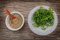 Le thym de citron de plan rapproché part du jardin d'herbes aromatiques en mortier blanc Photo libre de droits