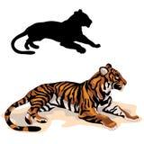 Le tigre adulte est silhouette noire réaliste de couleur Images libres de droits
