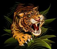 Le tigre de chasse Photo libre de droits