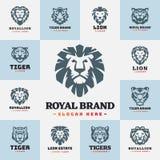 Le tigre et les lions font face à l'illustration sauvage de vecteur de puissance prédatrice de force d'insigne de logo Images libres de droits