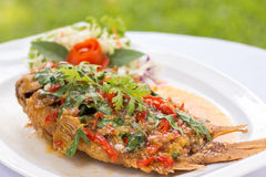 Le tilapia rouge cuit à la friteuse a complété avec la sauce aigre-doux sur le dessus image libre de droits