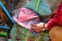 Le Tilapia sur la feuille, sang est éviscéré avec des couteaux, f photographie stock