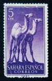 Le timbre de l'Espagne montre la girafe deux Vers 1964 Image stock