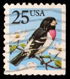 Le timbre imprimé aux Etats-Unis montre le gros-bec de Rose-breasted Image stock