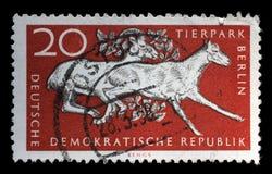 Le timbre imprimé en RDA montre le 10ème anniversaire du ZOO de Berlin Photos stock