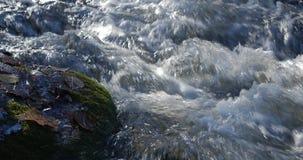 Le tir en gros plan de l'eau coule dans une crique de montagne avec les feuilles d'automne jaunes et brunes autour banque de vidéos