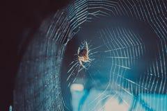 Le tir en gros plan de la toile d'araignée et le vol époussettent au soleil Photo stock