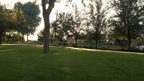 Le tir rapide de la grande cour comme Sun brille entre les arbres clips vidéos