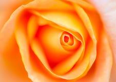 Le tir très doucement romantique de l'orange s'est levé Image libre de droits
