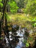 Le tonalità della scena di colori verdi della sorgente di acqua calda accumulano circondato dal TR Fotografia Stock Libera da Diritti