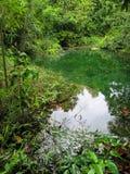 Le tonalità della scena di colori verdi della sorgente di acqua calda accumulano circondato dal TR Fotografia Stock