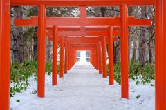 Le torii ? l'inari Sapporo de Fushimi dans la neige d'hiver images stock