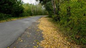 Le tour des bois d'automne de route les feuilles tombées le long du bord de la route Image stock