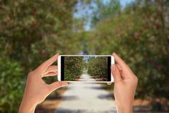 Le touriste fait une photo d'un beau jardin à Pompeii image libre de droits