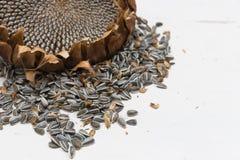 Le tournesol dirige des graines de récolte photos libres de droits