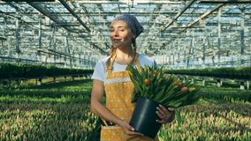 Le trädgårdsmästaren med tulpan går inom ett växthus lager videofilmer