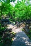Le tracce di montagna, alberato, soleggiato e si affrettano, balzano fotografie stock