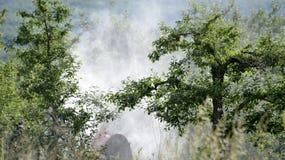 Le tracteur pulv?rise l'insecticide dans des domaines de champ de pommiers images stock