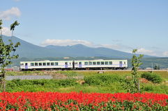 Le train sur le chemin de fer dans la nature Photo stock