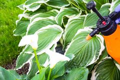 Le traitement du jardin fleurit des parasites et des maladies image stock
