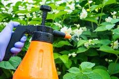Le traitement du jardin fleurit des parasites et des maladies image libre de droits