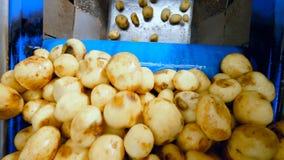 Le transporteur industriel replace des pommes de terre vers le bas banque de vidéos